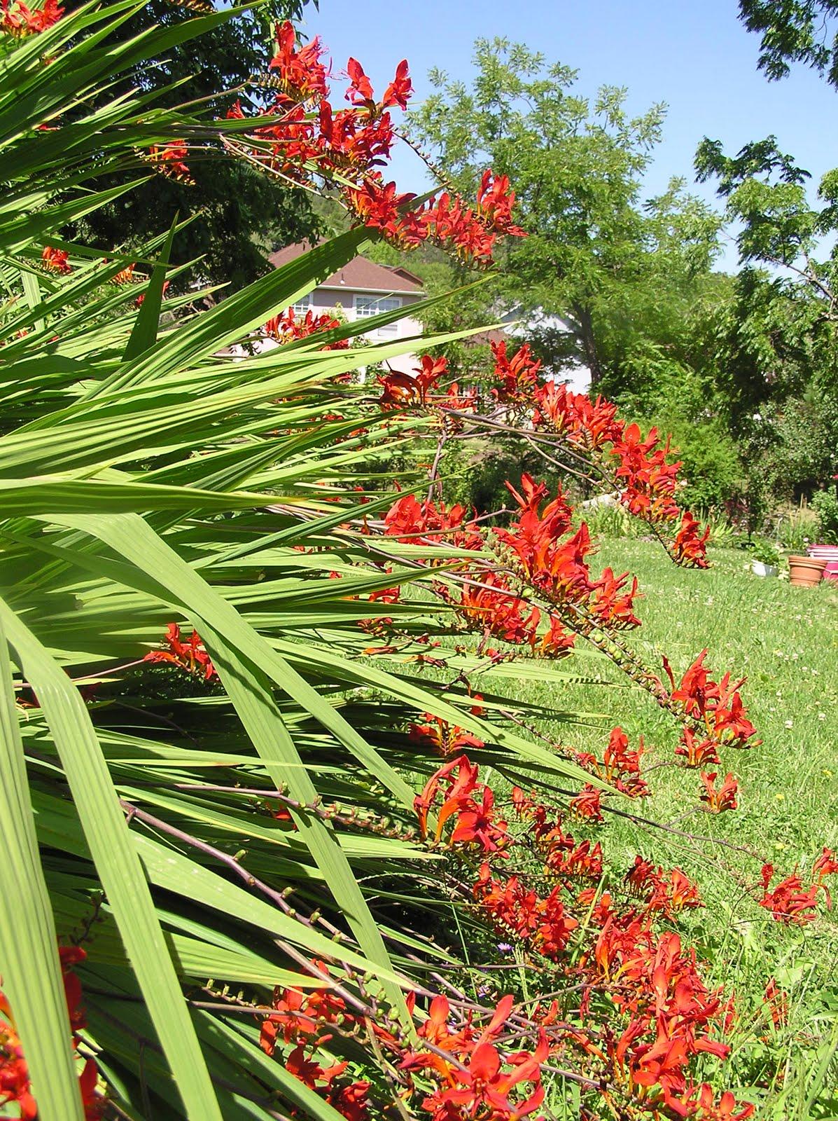 Deer Resistant Perennials Ashland Garden Club