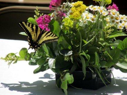 Member's Flowers