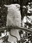 Darlene Birds_BW