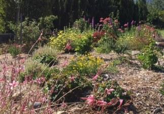 Bee garden 2