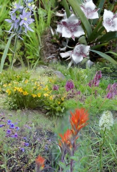 wildflower-collage