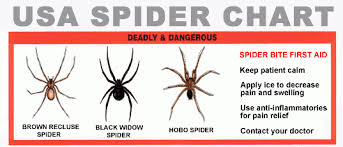 Spiders images