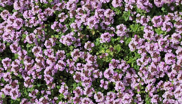 Plantas tolerantes a la sequía para el Noroeste del Pacífico, además de otras sugerencias para jardines de clima cálido | OregonLive.com